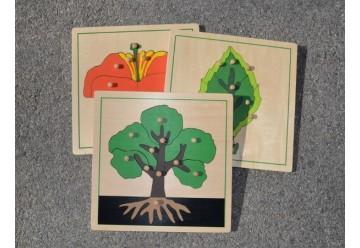 Lot de 3 Puzzles Botaniques en bois